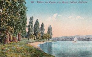 OAKLAND, California, 1900-10s; Willows and Poplars, Lake Merritt