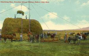 OR - Baker City. Stacking Hay in Powder River Valley