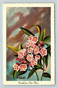 Mountain Laurel, Pennsylvania State Flower, Chrome Postcard