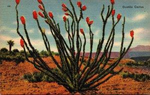 Texas Desert Scene Ocotillo Cactus In Bloom
