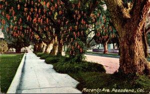 California Pasadena Pepper Trees Along Marengo Avenue
