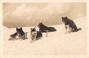 BR73703 switzerland polarhunde auf jungfraujoch dog chien real photo