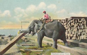 Elephant piling Teak , BURMA , 00-10s