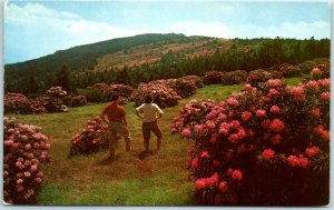Bakersville / Roan Mtn. NC Postcard Largest Rhododendron Garden in the World