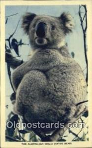 Bear Postcard, Bear Post Card Old Vintage Antique