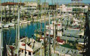 California San Francisco The Fishing Fleet