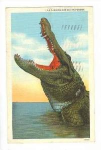 Crocodile With Mouth Open,Yawning For You In Panama1939