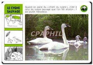 Map The Swan Wild Bird WWF