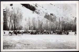Idaho Deer on Warm Springs Creek SUN VALLEY - RPPC - EKC 1939-1950