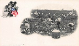 Black People Picking Cotton, 1898 Private Mailing Card, Postcard, Unused