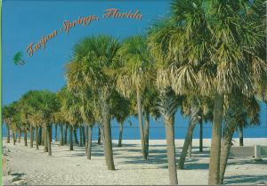HOWARD PARK BEACH POSTCARD TARPON FLORIDA USA UNITED STATES UNUSED