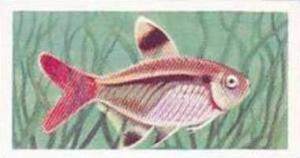 Mitchum Foods Vintage Trade Card Aquarium Fish 1957 2nd Series No 34 Riddles ...