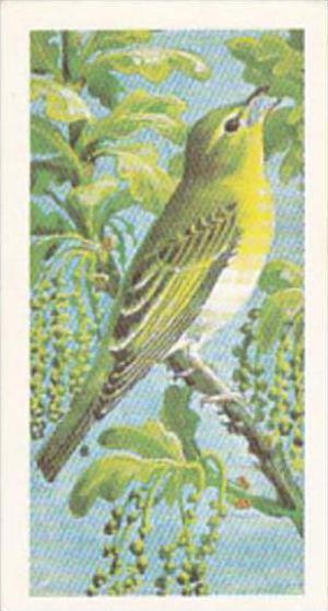 Brooke Bond Tea Trade Card Wild Birds In Britain No 16 Wood Warbler