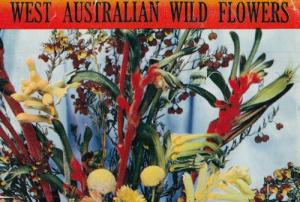 West Australia Wild Flowers 12x Postcard Old Fold Open Book