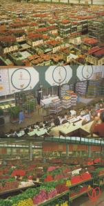Amsterdam Holland World Flower Centre Displays Auction Rooms 3x Postcard s