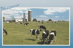 Cows in American's Dairyland WI, Wisconsin
