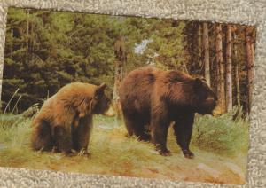 Two Bears Postcard Wildlife Animals Unused Chrome
