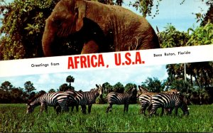 Florida Greetings From Boca Raton Africa U S A With Elephants and Zebras