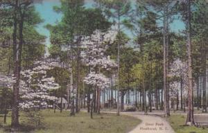 North Carolina Pinehurst Deer Park Handcolored Albertype
