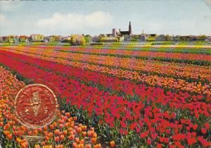 Netherlands Holland In Flowerdecoration