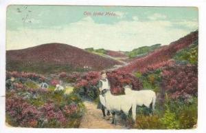 Girl herding sheep, Denmark, PU 1916, Den jyske Hede