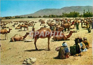 Postcard Modern Kabul Stockyard Ghaznee Camels