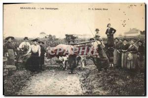 Old Postcard Folklore Wine Harvest Vineyard Beaujolais Cow TOP