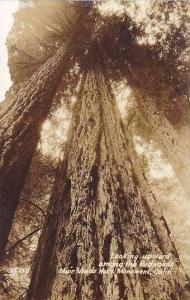 RP, Looking Upward Among The Redwoods Muir Woods National Monument, Californi...