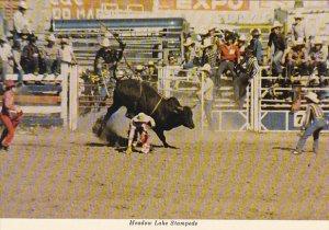 Canada Saskatchewan Meadow Lake Stampede Bull Riding