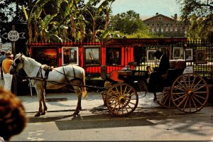 Louisiana New Orleans French Quarter Sightseeing Carriage 1980