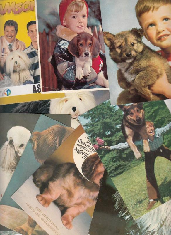 Dogs related postcards x 10 dog chien
