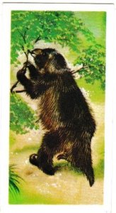 Trade Cards Brooke Bond Tea Prehistoric Animals No. 48 Megatherium