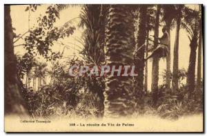 Postcard Old Negro Male Black The palm wine harvest