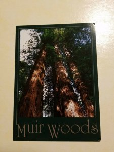 Muir Woods, California Postcard