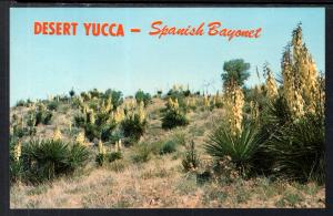 Desert Yucca,Spanish Bayonet