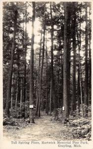 Grayling Michigan~Hartwick Memorial Pine Park-Tall Spiring Pines by Trail~RPPC