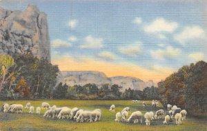 Sheep Grazing on a Mountain Meadow Vernal, Utah, USA Sheep Unused