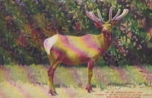 American Wapiti Elk New York Zoological Park