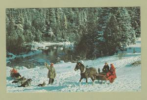 Holiday Scenic Postcard With Horse & Sleigh Country Winter Scene Dog Sled