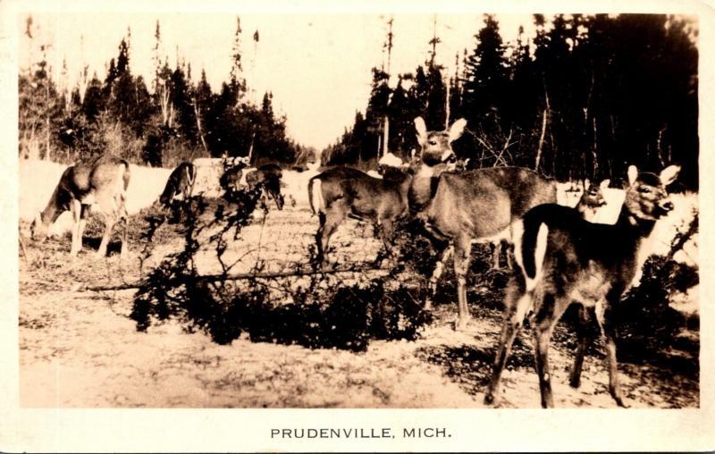 Michigan Prudenville Deer Herd Real Photo