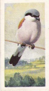 Trade Cards Brooke Bond Wild Birds in Britain No21 Red-Backed Shrike