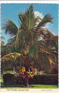 Florida Coconut Palm