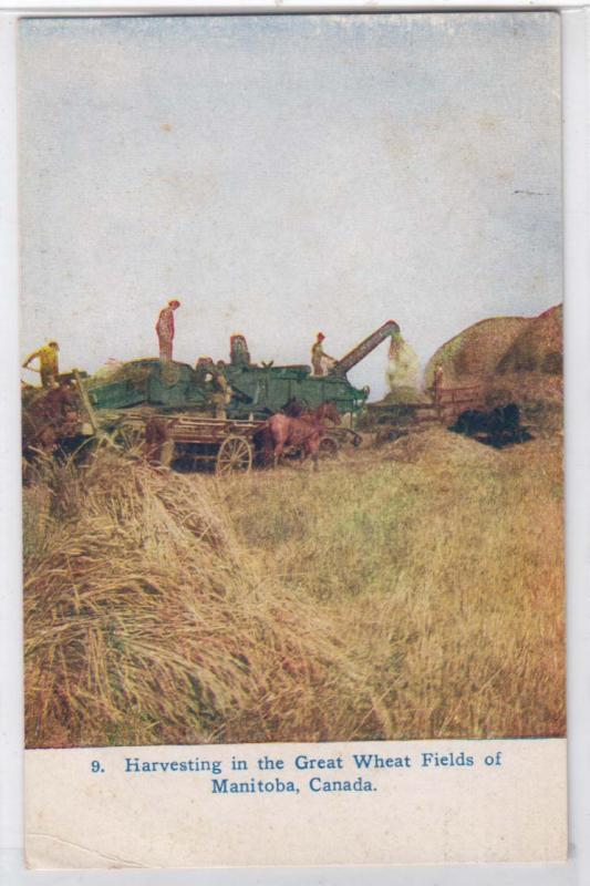 Harvesting Wheat, Man