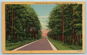 Postcard DE Rehoboth Beach Delaware Through The Pines On The Highway c1950s X5