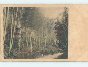 Pre-1907 PATH IN FOREST Country Of China hJ6561