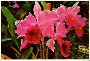 Hawaii Beautiful Orchid 1992