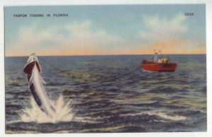 P9012 old linen card tarpon fishing hooked jumping out of water in florida