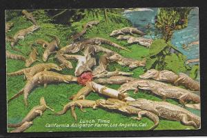 'Lunch Time' Alligator Farm Los Angeles CA Unused c1920s