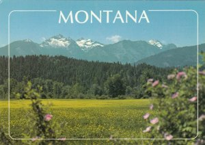 Springtime in MONTANA'S Bitteroot Valley, 50-70s