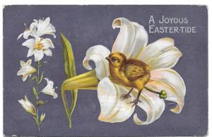 Easter Chick in a Lily Vintage Embossed Postcard 1910